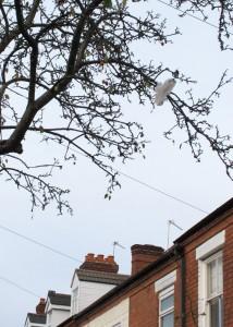 040a Plastic Bag Bird 2