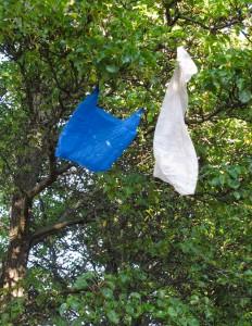 040b Plastic Bag Bird 3