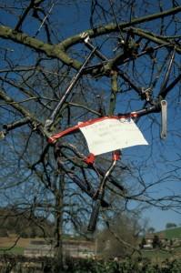 040e Bike Frame in Tree